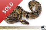 classic-female SOLD