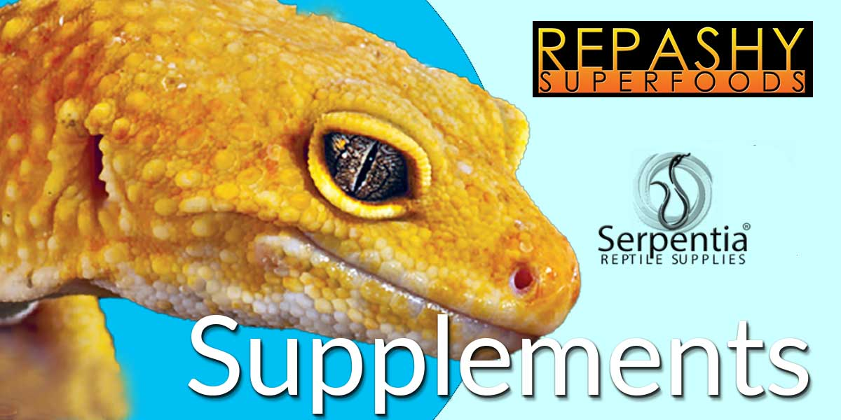 Repashy Superfoods reptile calcium plus, all-in-ones, vitamins and supplements