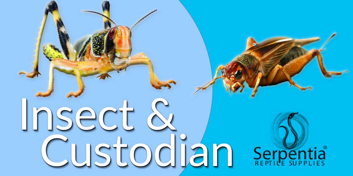insect and bio active custodian food gutloaders and dusting powders for crickets, springtails, locusts, dubia roaches, frutifly