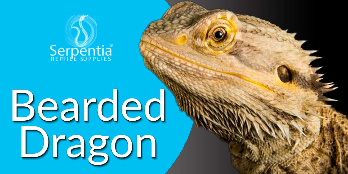 bearded dragons foods complete diets and supplements