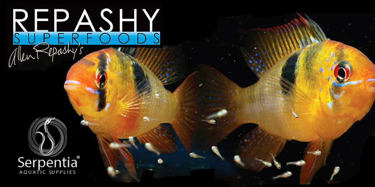 Repashy Superfoods Freshwater Fish Foods Gel Premix