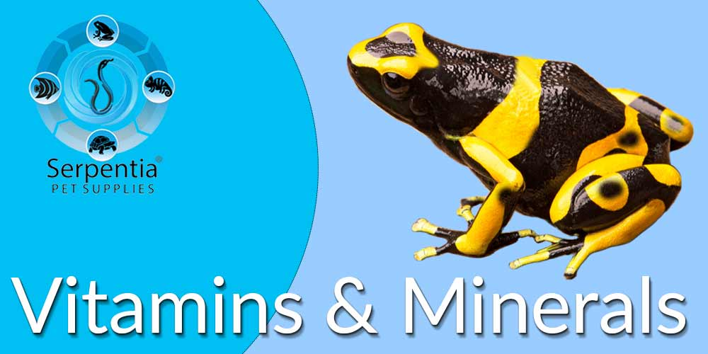 Vitamin and Mineral Supplements for Pet Reptiles and Birds