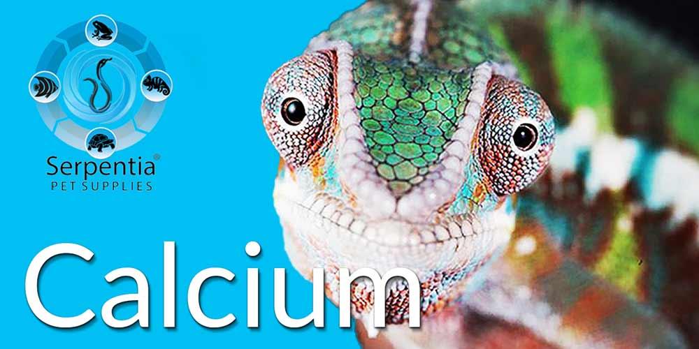 Reptile Calcium Powder Supplements