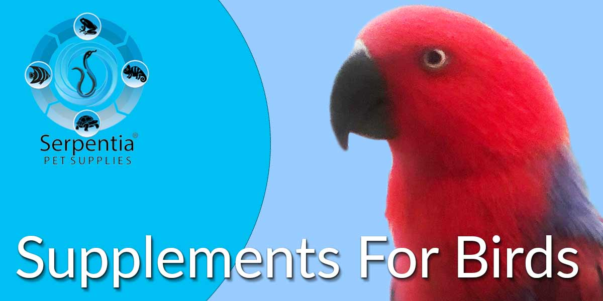 Supplements and Vitamins For Parrots and Birds