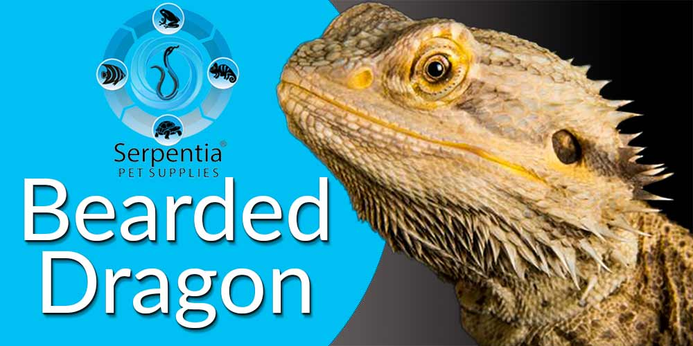 Bearded Dragon Foods, Supplements And Complete Diets