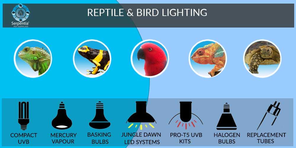 Reptile Vivarium and Bird Lighting Bulbs and Equipment