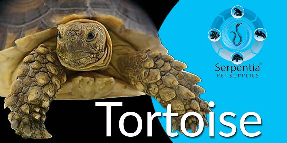 Tortoise Foods, Calcium, Vitamins And Supplements
